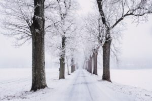 Winterhautpflege in Hannover